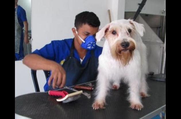 vacunacion de mascotas