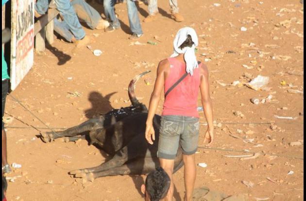 En esta foto tomada del Facebook se señala que este es el toro muerto por los aficionados.