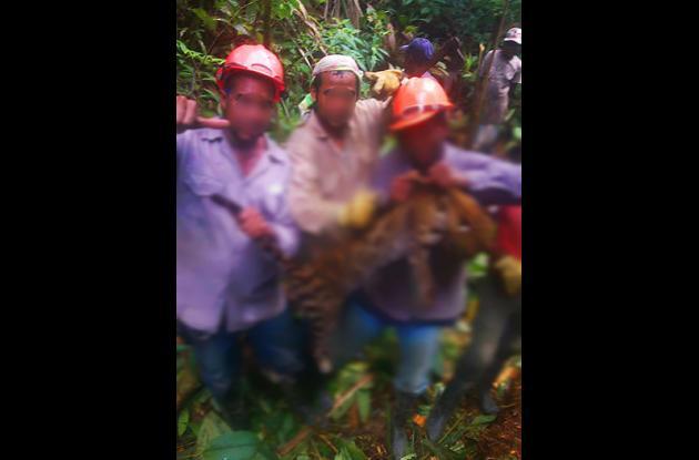 matanza de animales en colombia
