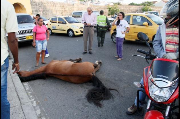 caballo muerto en el centro historico