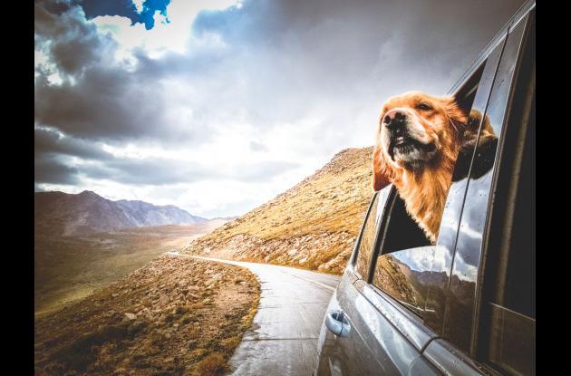 Viajar con las mascotas.