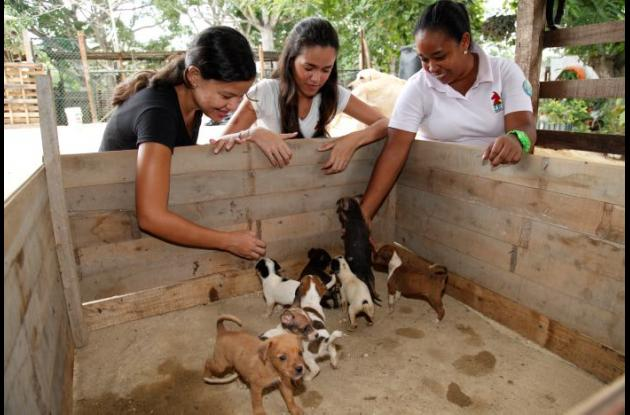 FUNDACIÓN RESCATE PARA ANIMALES ABANDONADOS