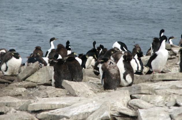 Pingüino desaparecido fue encontrado con vida.