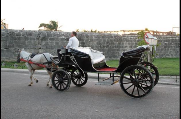 Caballos cocheros Cartagena