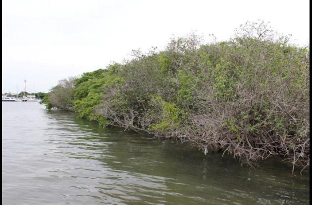 Jornada de limpieza en la Isla Chivo