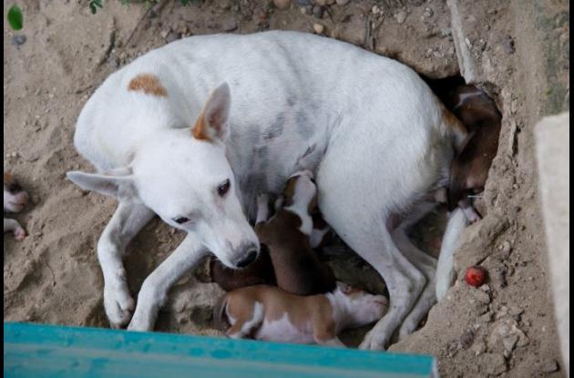 Apuñalan a un perro de ocho meses en Cali