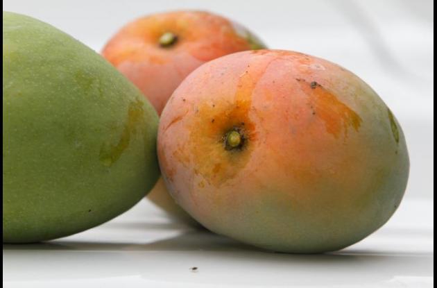 Mango, en la zona norte del departamento.