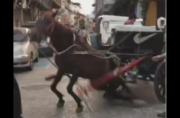 caballo cochero