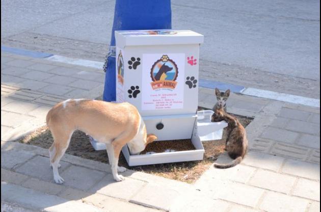 """""""La Mona"""", perrita que adoptó dos gaticos, fue la primera comensal del comedor público para animales callejeros."""