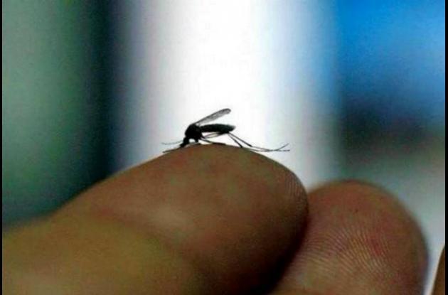 Chikunguya, Zika, Dengue