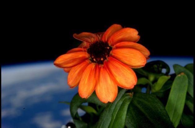 planta en el espacio