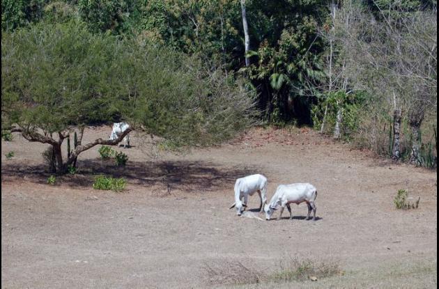 La intensa sequía afecta a muchas zonas del departamento de Sucre.