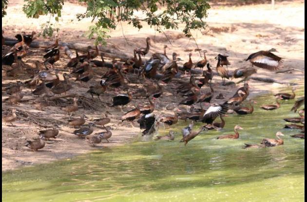 fauna en el aviario