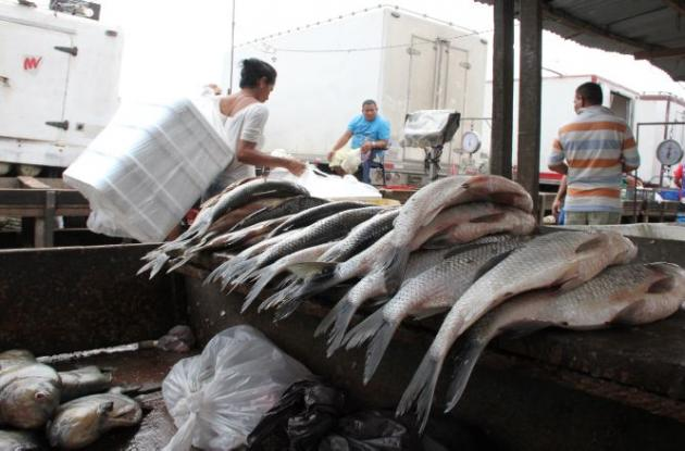 venta de pescado