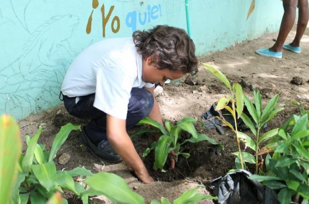 50 árboles de Cañaguate serán sembrados en la zona verde de los bajos del Puente Román.