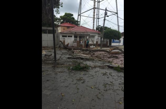 El árbol de más de 80 años se sigue cayendo a pedazos en la plaza de Turbaco. La Alcaldía anunció que iniciará la poda y el corte de las ramas más secas, de acuerdo a las recomendaciones de Cardique.