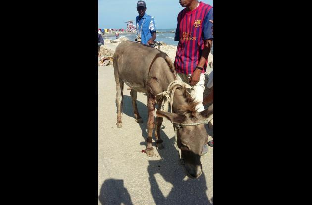 accidente de trnasito burro carreta y taxi avenida santander