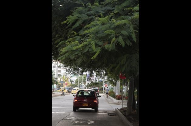 Unas ramas de un árbol en esa esquina obstaculizan la visión del conductor.
