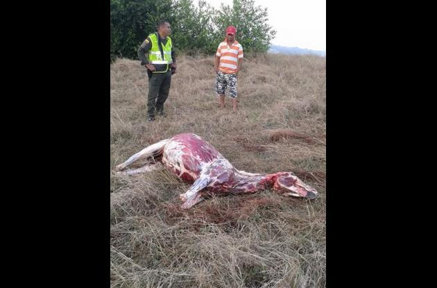 Las autoridades estiman que la piel de un burro puede llegar a costar hasta 700 mil pesos en el mercado negro.
