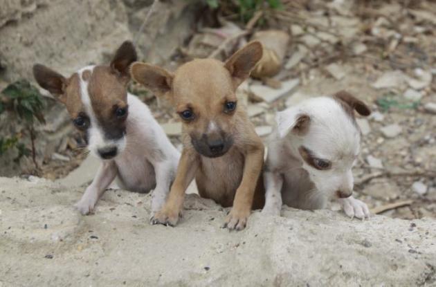 Este proyecto busca promover un trato digno hacia los animales,