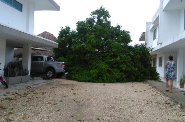 Varios árboles fueron arrasados causando daños materiales en viviendas.