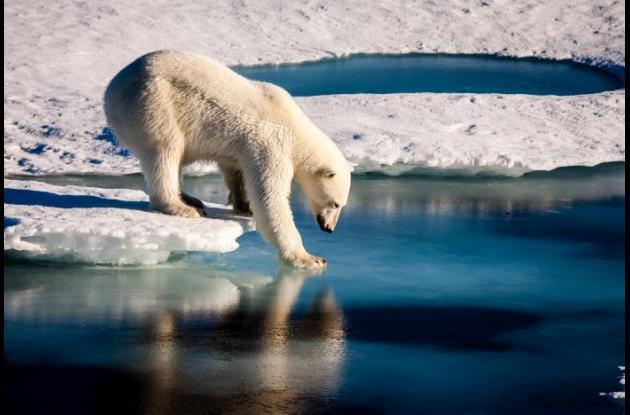 Océano Ártico calentamiento global