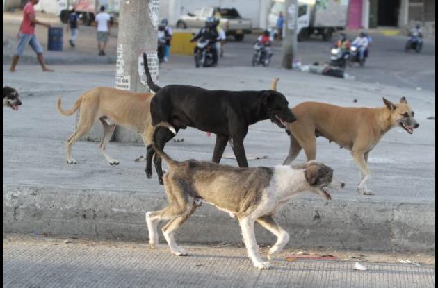 animales en la calle