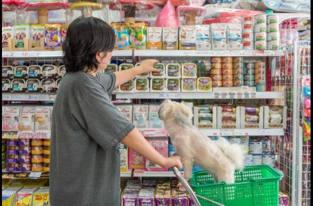 Perro dentro de un supermercado.
