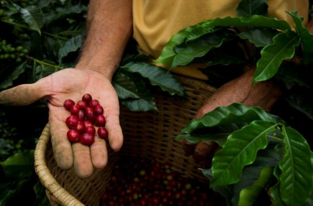 Otro de los beneficios que trae el café para la salud, es la disminución de probabilidades de padecer infartos,
