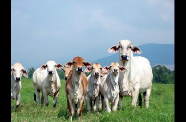 La ganadería es uno de los sectores de mayor pérdida por causa del invierno