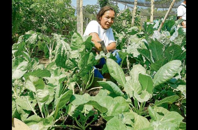 Créditos subsidiados para agricultores y ganaderos