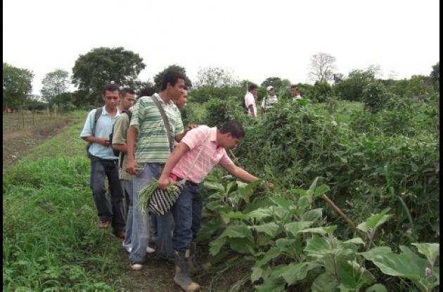 En poco tiempo se lograron buenos rendimientos en los cultivos de hortalizas sembrados en la Universidad de Córdoba.