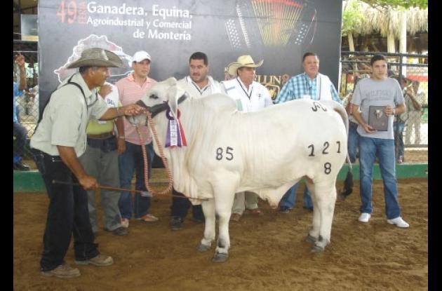 Campeón menor reservado: Fedegrán VG, propiedad de Fedegrán Limitada, hacienda Villa Gladys, de Lorica (Córdoba).