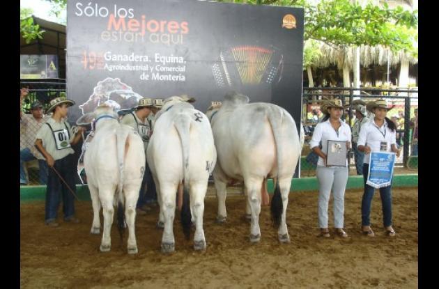 El ejemplar JDH Jaxon De Manso, de la hacienda La Vittoriana, se impuso en la mejor descendencia de un mismo toro de la raza Brahman.