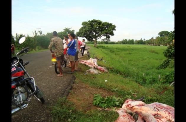 Los animales quedaron muertos a la orilla de la carretera.