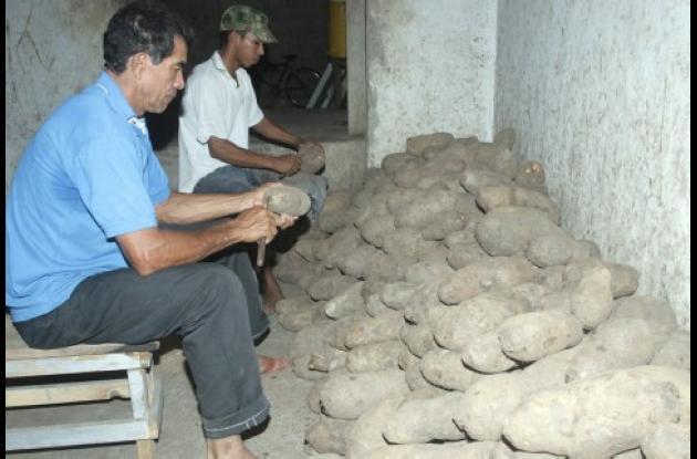En Sucre, Córdoba y Bolívar ya hay producción de ñame lista para ser exportada.