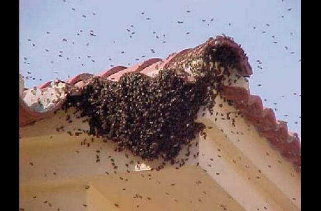 Enjambre de abejas.