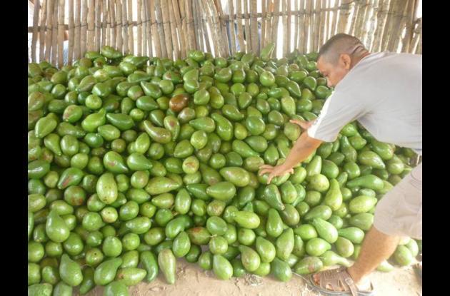 El objetivo es capacitar a los productores agrícolas de Turbana y luego agruparl