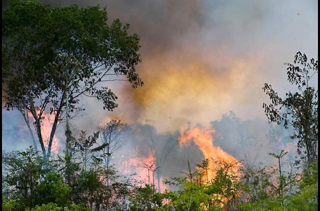 Las principales amenazas a la selva son los incendios, el avance de la agricultu
