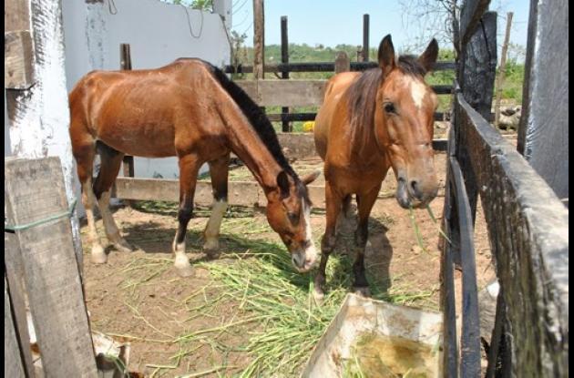 Albergue para animales maltratados en Cartagena,