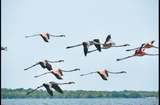 Animales migratorios