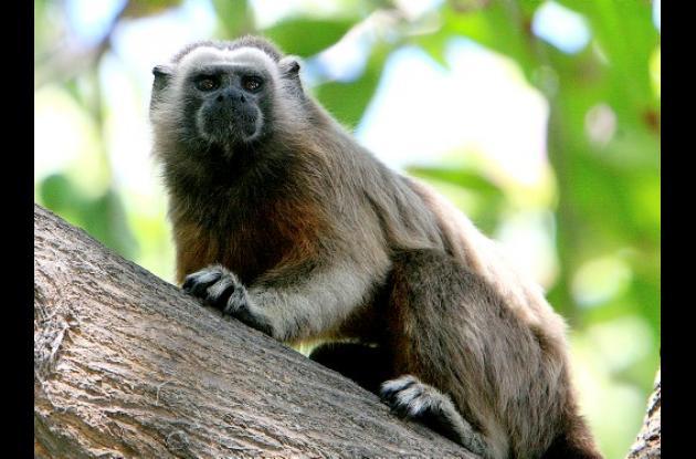 Animales en el Parque del Centenario de Cartagena