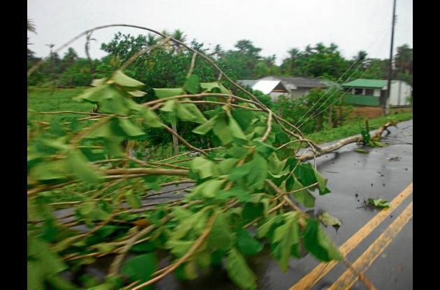 Las lluvias hacen que caigan ramas sobre las redes.