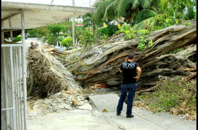 Cartagena: EPA a conocer requisitos para talar, cortar y trasladar arboles.