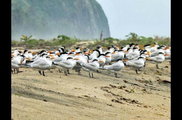 Colombia se puede perder el espectáculo del paso de las aves migratorias.