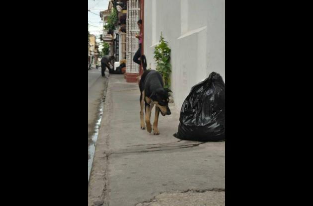 Bandido mientras busca comida en el Centro.