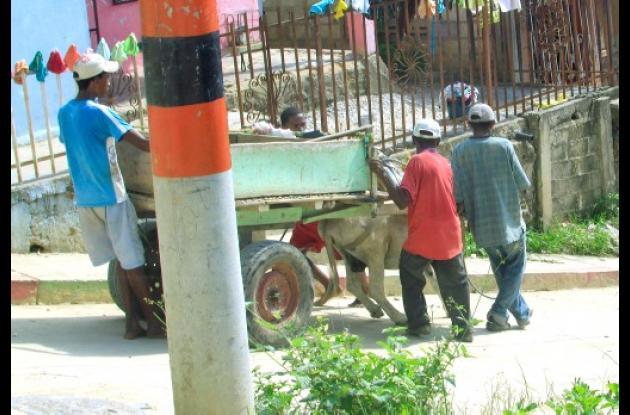 Burros de Cartagena necesitan sensibilidad de sus dueños