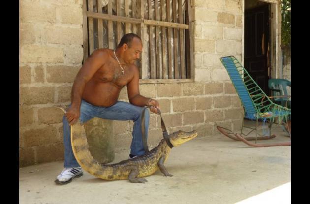 Una babilla de casi 2 metros de longitud fue rescatado por el ciudadano Álvaro M