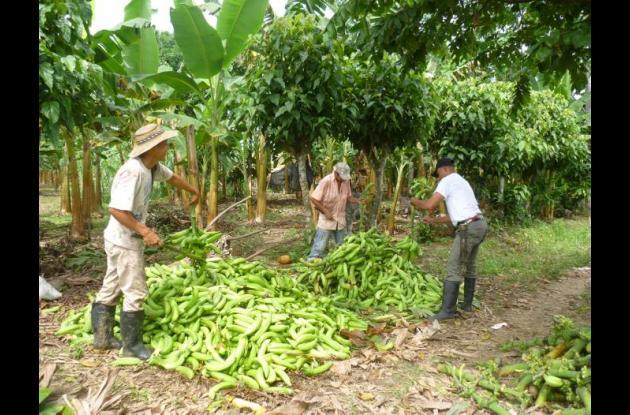 Campesinos Córdoba
