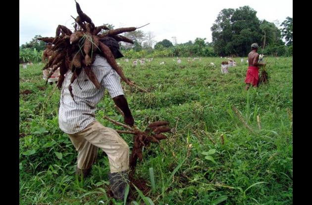 Los campesinos amenazados habitan la vereda Los Palmitos desde el año 1979 y se